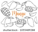 mango fruit vector set.... | Shutterstock .eps vector #1055489288