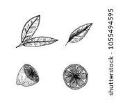 hand drawn sketch style lemon... | Shutterstock .eps vector #1055494595