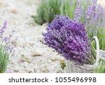 wicker basket with lavender... | Shutterstock . vector #1055496998