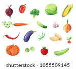 watercolor hand drawn sketch... | Shutterstock . vector #1055509145