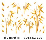realistic bunch of oats or... | Shutterstock .eps vector #1055513108