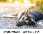 Black Dog Sleeps On The Sand I...