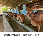 cattle shed rural india | Shutterstock . vector #1055548175