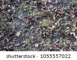 Small photo of Greyish brown fallen leaves in the grass in late autumn