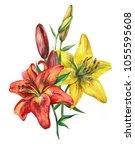 yellow red lilies bouquet... | Shutterstock . vector #1055595608