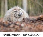 this sheep enjoy the sun ... | Shutterstock . vector #1055602022