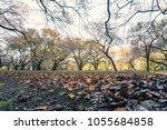 sunrise in a warm fall. green... | Shutterstock . vector #1055684858