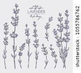 collection of lavender  twig ... | Shutterstock .eps vector #1055786762