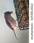 Small photo of Tufted Titmouse - Bird on Suet Feeder - Vertical Portrait
