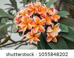 beautiful orange and pink...   Shutterstock . vector #1055848202