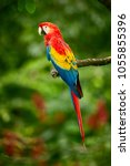 Red Parrot  Macaw Parrot  Fly...