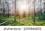 summer green landscape. wild...   Shutterstock . vector #1055866832