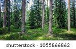 summer forest jungle. plants...   Shutterstock . vector #1055866862