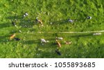 cows on the pasture. aerial...   Shutterstock . vector #1055893685