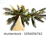 coconut palm tree isolated | Shutterstock . vector #1056056762