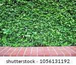 green leaves bush wall fence...   Shutterstock . vector #1056131192