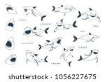 vector shark sea animal wild... | Shutterstock .eps vector #1056227675