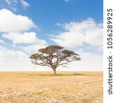 solitary acacia tree in african ... | Shutterstock . vector #1056289925