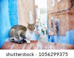 Stock photo beautiful stray cats sleep and walk in the streets of morocco beautiful fairy tale streets of 1056299375