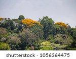 tropical jungle in panama | Shutterstock . vector #1056364475