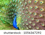 Close Up Photography Of The...