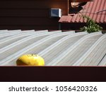 Small photo of Yellow afl football stacked on the roof of a house in a sunny afternoon