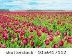 spring in amsterdam. vivid... | Shutterstock . vector #1056457112