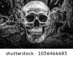 Small photo of The skull is a symbol of horror and death. In the cemetery. white and black