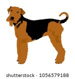 portrait of airedale terrier... | Shutterstock .eps vector #1056579188