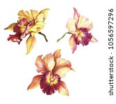 set of orchids. hand draw... | Shutterstock . vector #1056597296