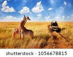 group of wild giraffes in...   Shutterstock . vector #1056678815