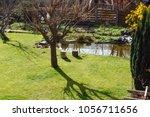 medium sized back garden with... | Shutterstock . vector #1056711656