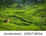 tea plantations in kerala | Shutterstock . vector #1056718016