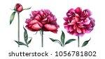 elegant burgundy peonies... | Shutterstock . vector #1056781802