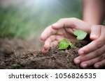 top view of young tree with... | Shutterstock . vector #1056826535