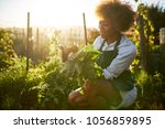 Small photo of young african american millennial woman pulling golden beets from dirt in communal urban garden