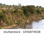 herd of herbivores on the high...   Shutterstock . vector #1056874028