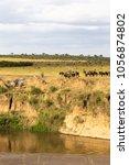 herd of herbivores on the... | Shutterstock . vector #1056874802