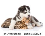 Stock photo siberian husky puppy hugging bengal kitten isolated on white background 1056926825