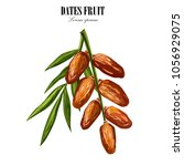 dates with with palm leaves and ... | Shutterstock .eps vector #1056929075