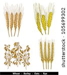 cereals illustration   wheat ... | Shutterstock .eps vector #105699302