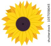 Sunflower With Seeds Vector...
