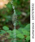 Small photo of Along came a spider