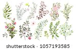 watercolor illustration. ... | Shutterstock . vector #1057193585