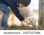 cute young boy is feeding a... | Shutterstock . vector #1057227386