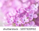 macro image of  lilac flowers.... | Shutterstock . vector #1057320932
