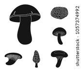 poisonous and edible mushroom... | Shutterstock .eps vector #1057374992