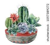 watercolor cactus with... | Shutterstock . vector #1057389272