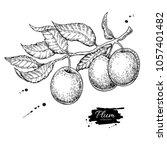 plum branch vector drawing.... | Shutterstock .eps vector #1057401482