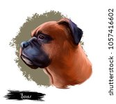 boxer dog breed isolated on...   Shutterstock . vector #1057416602